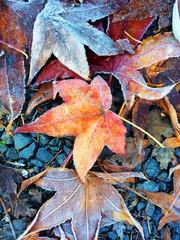 frozen leaf in color