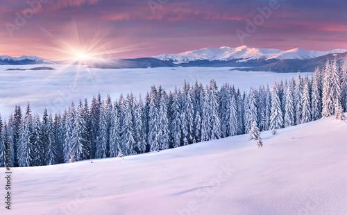 Fotobehang Purper Beautiful winter sunrise in the mountains