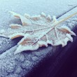 feuille hiver