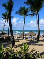 Strandliegen unter Palmen in der DomRep in der Karibik