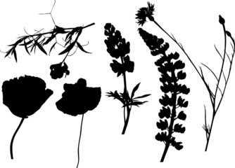 six wildflowers silhouettes on white