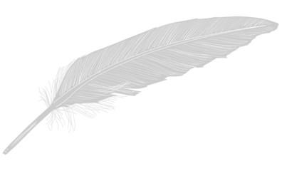 single gray feather illustration