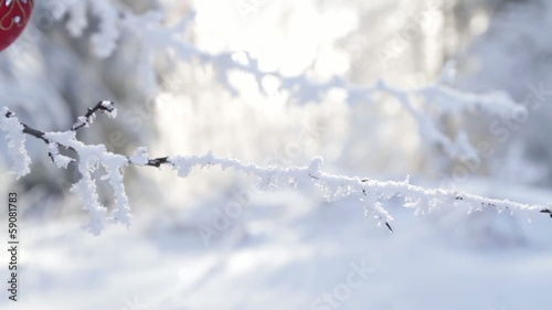 Red Christmas Decoration Frozen Branches Outdoors Background