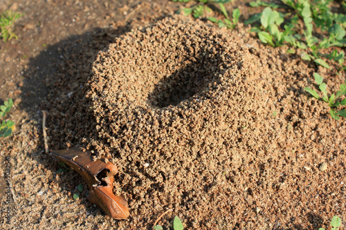anthill built timber ant for conduct facilities