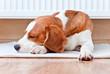 dog has a rest  near to a warm radiator