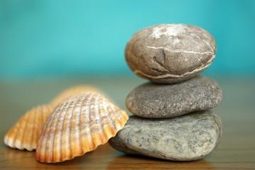 Steine und Muscheln