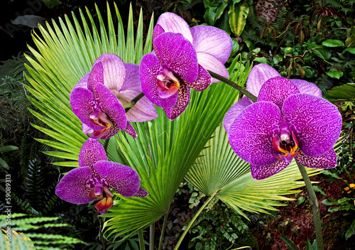 Orchid and leaves wallpaper