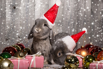 christmas rabbits