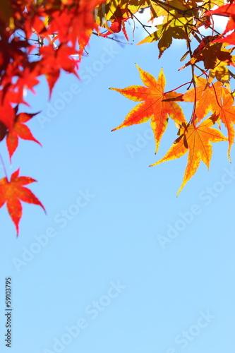 カエデの紅葉と青空