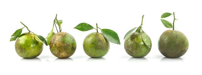 Five green orange fruits arrang in row