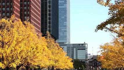 東京駅 駅前広場の銀杏並木と丸の内高層ビル街 ティルト