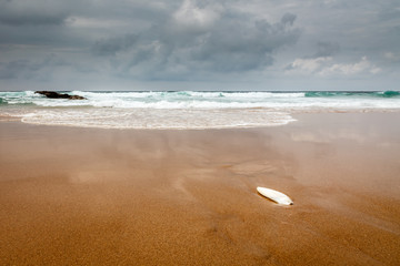 Seashell on the Shore of Guincho Beach in Cascais near Lisbon, P