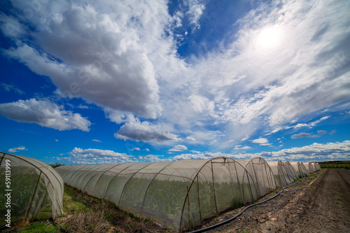 Greenhouse with chard vegetables under dramatic blue sky