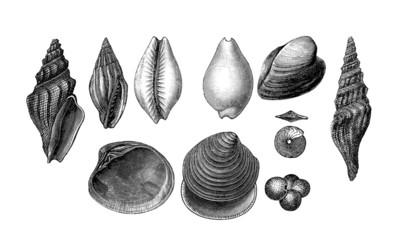 10 Prehistoric Fossils