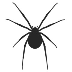 cartoon image of latrodectus hasselti