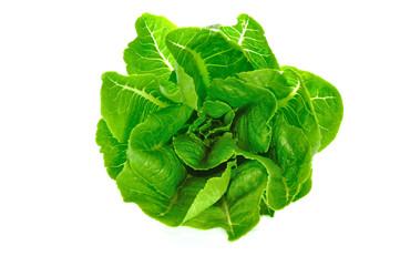 Green cos salad