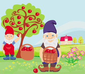 two dwarfs and apple tree