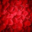 Vignette style red rose petal texture