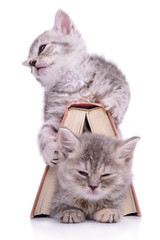 kittens with book