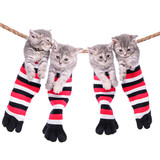 kittens hanging washing line