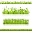 Set grass. Vector image.
