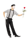 Full length portrait of a male mime artist giving a rose flower