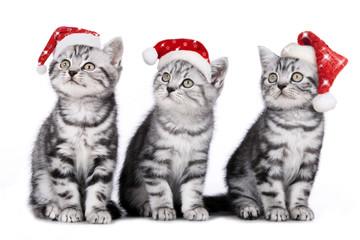 Drei Weihnachtskätzchen - christmas kitten