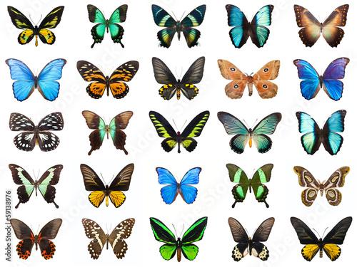 Tuinposter Vlinder Tropical butterflies