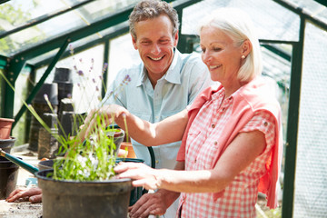 Middle Aged Couple Working Together In Greenhouse