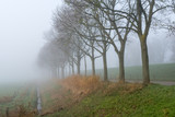 Row of trees in a dense fog