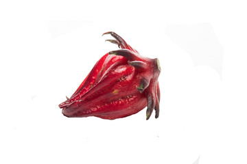 Roselle on a white background