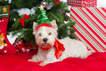 Westie with new year tree