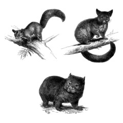 3 Marsupials