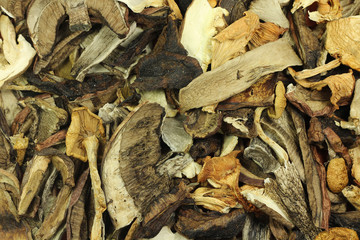mixture of dried wild mushrooms background