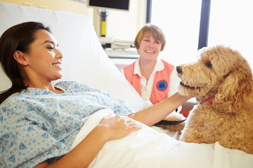 Pet Therapy Dog Visiting Female Patient In Hospital