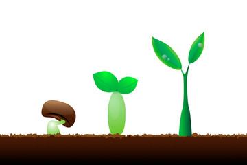 Evolution little plant seedling on white background