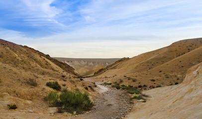 Desert Negev in Israel