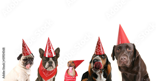 Aluminium Hond a group of dogs with party hats on