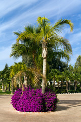 Palmen im Garten, Zypern