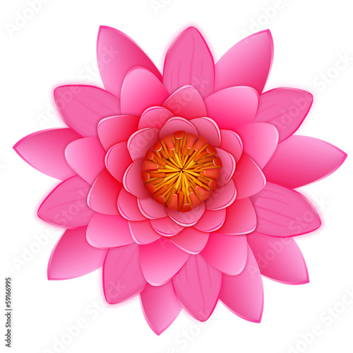 Beautiful pink lotus or waterlily flower isolated on white