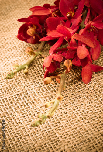 beautiful red orchid on burlap