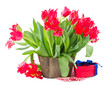 bunch of spring red tulips with gift box