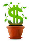 Growing dollar symbol like plant with leaves in flower pot