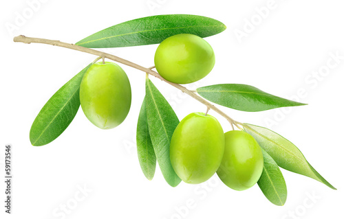 Branch of olives isolated on white