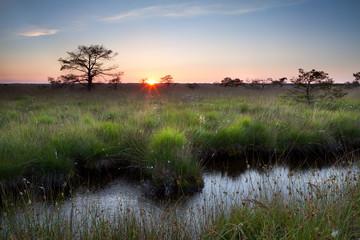summer sunset on swamp