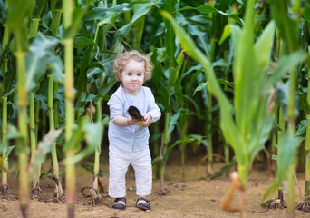 Funny baby girl playing and hiding in a corn field
