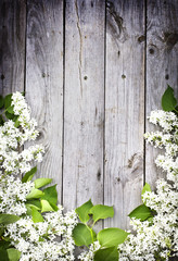 lilac on a wooden surface/ Spring flower background