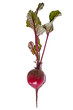 Nature red beetroot on white