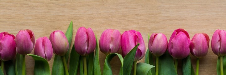 Pink tulips panorama