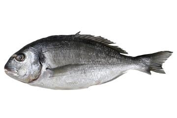 Frischer Fisch Dorade Freisteller